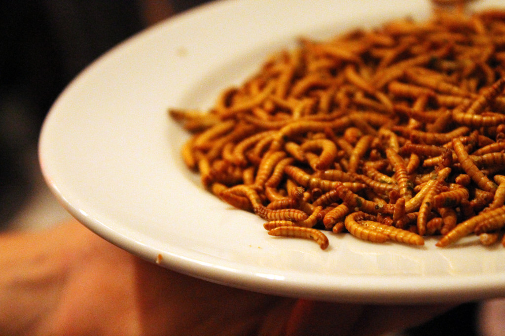 Mealworms. Future Food Salon. Photo Lisa Vlasova.