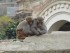 Monkey Love. PHoto Rachel Levine