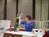 Cat show ring. SNAC. Photo Rachel Levine
