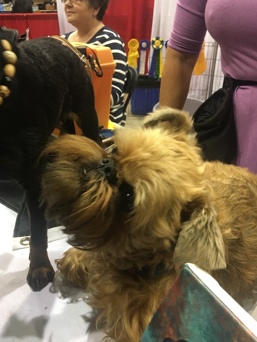 Dog. Salon National de Animal Compagnie de Montreal. SNAC. Photo Rachel Levine